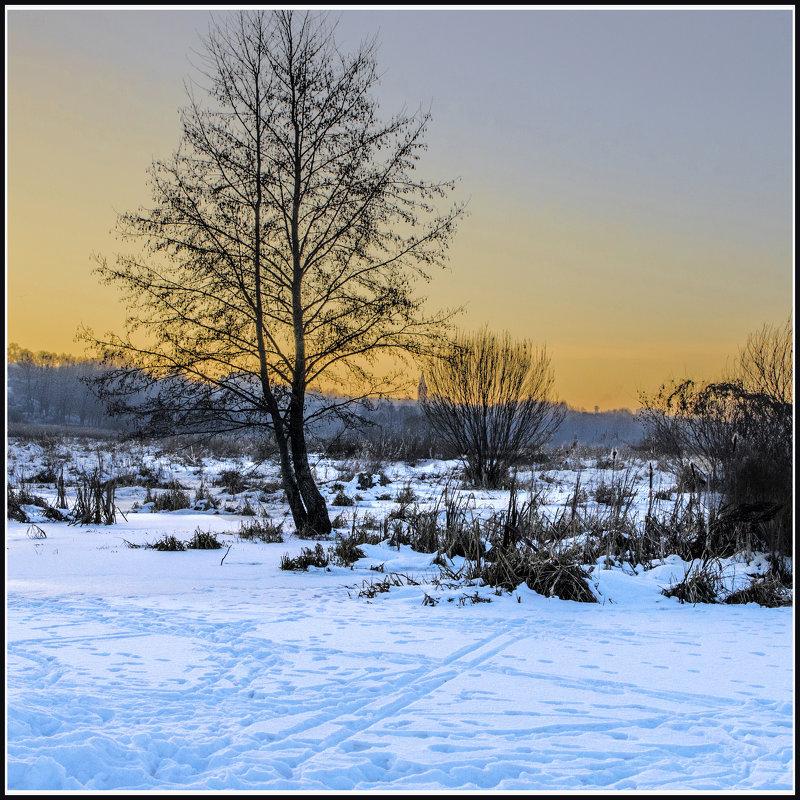 Одинокое дерево - Дубовцев Евгений