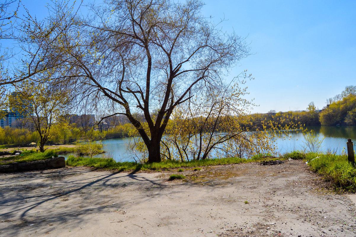 Вода и пустые деревья - Света Кондрашова