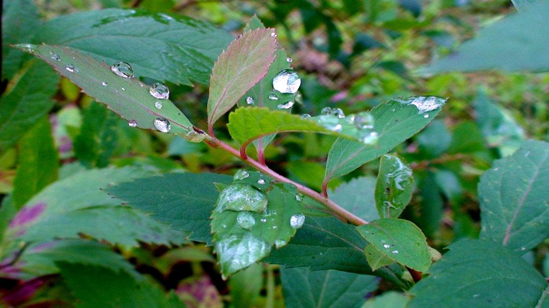 после дождя - elena manas