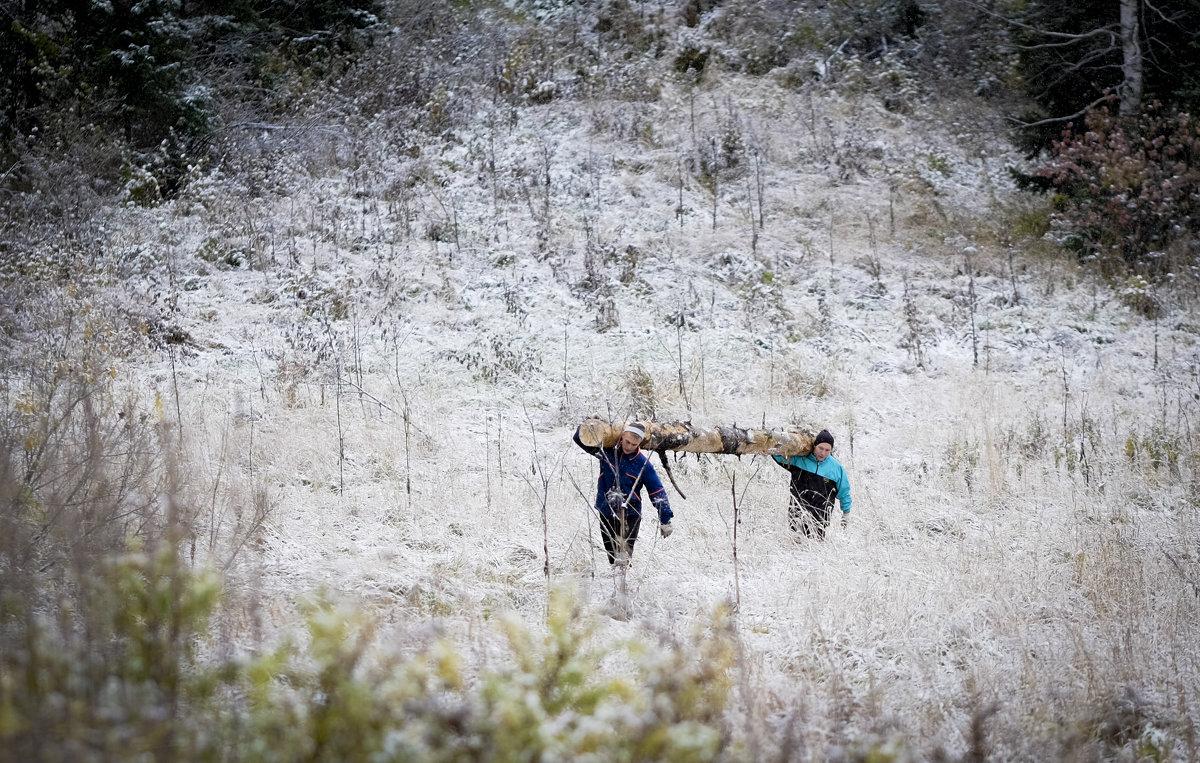 Откуда дровишки? Из лесу вестимо - Антон Тихомиров