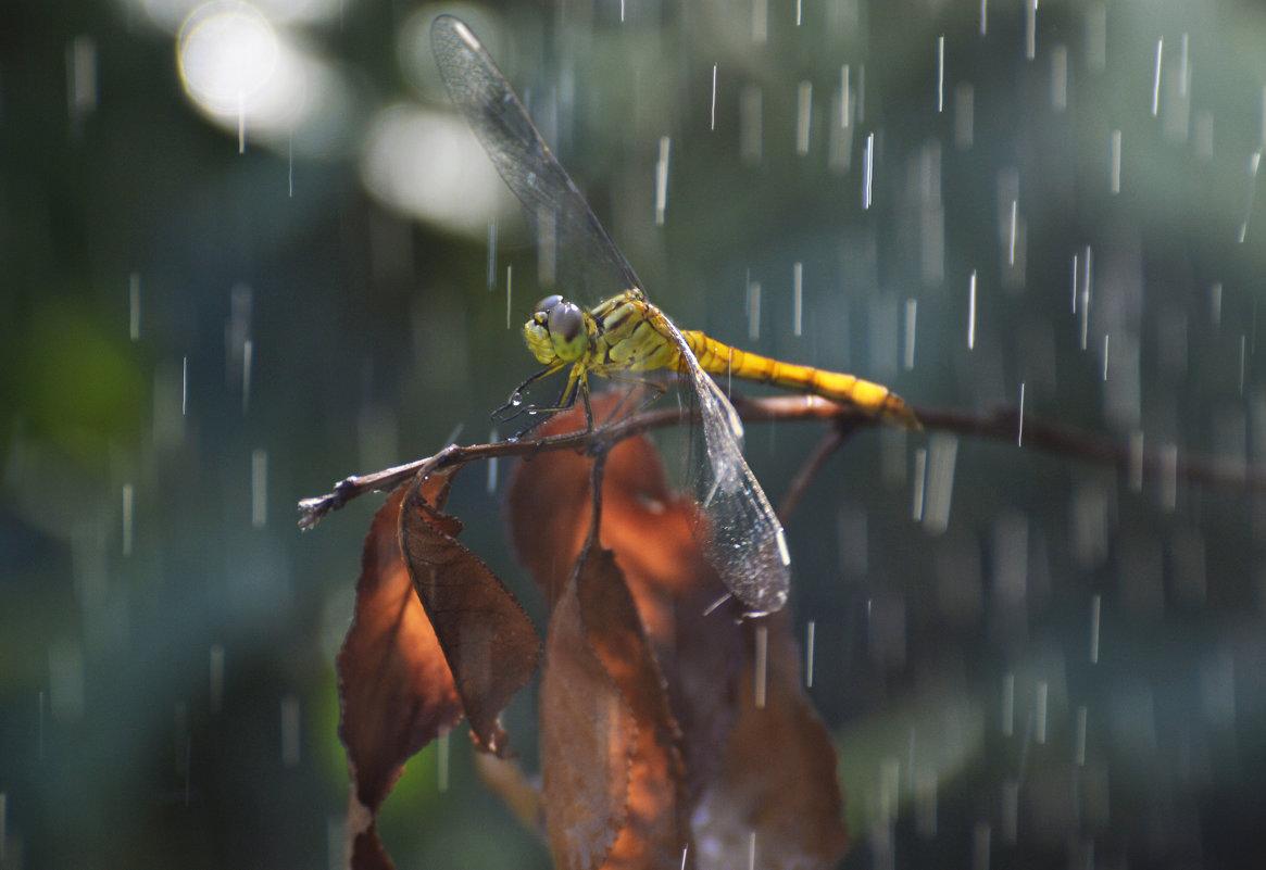 нелётная погода - Алена Рыжова