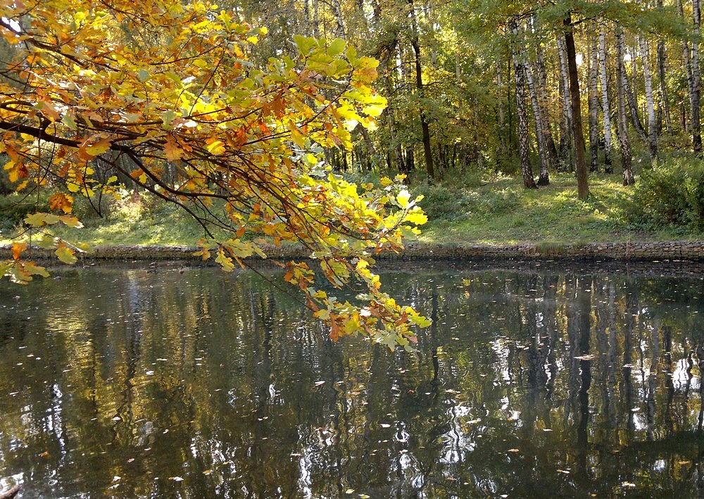 Осенняя ветка... - анна нестерова