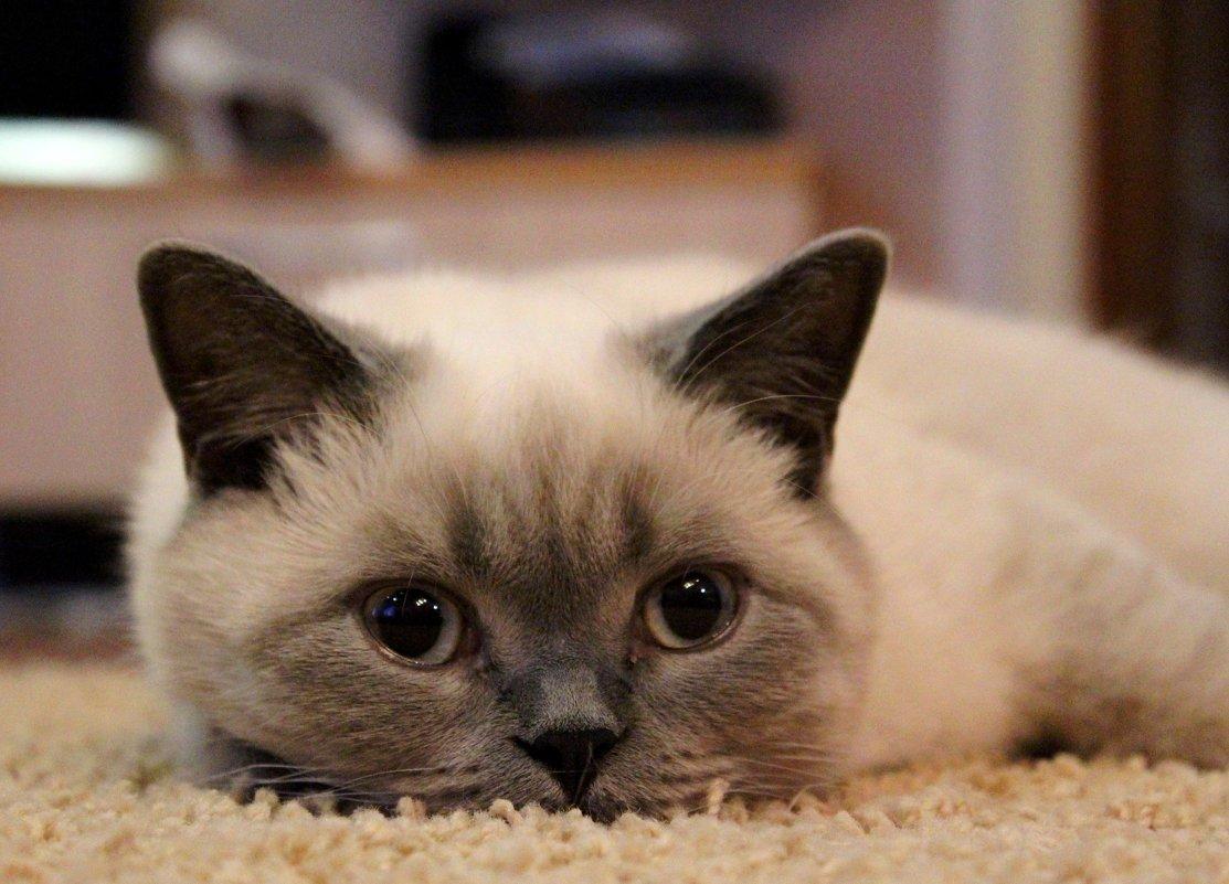 Жизнь  кошачья... - Наталья Казанцева