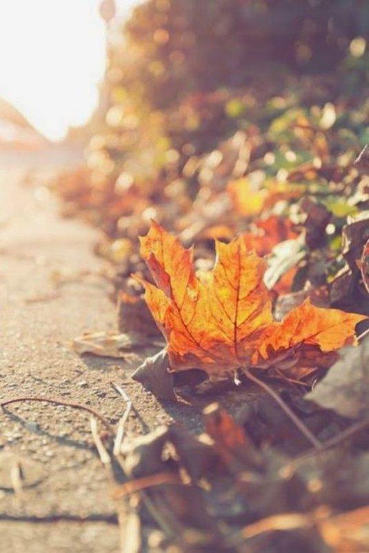 Осенний лист - Галина Фуникова