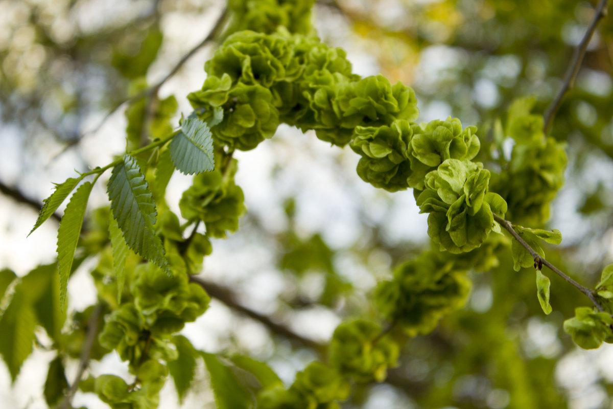 Свежая зелень - Лидия (naum.lidiya)