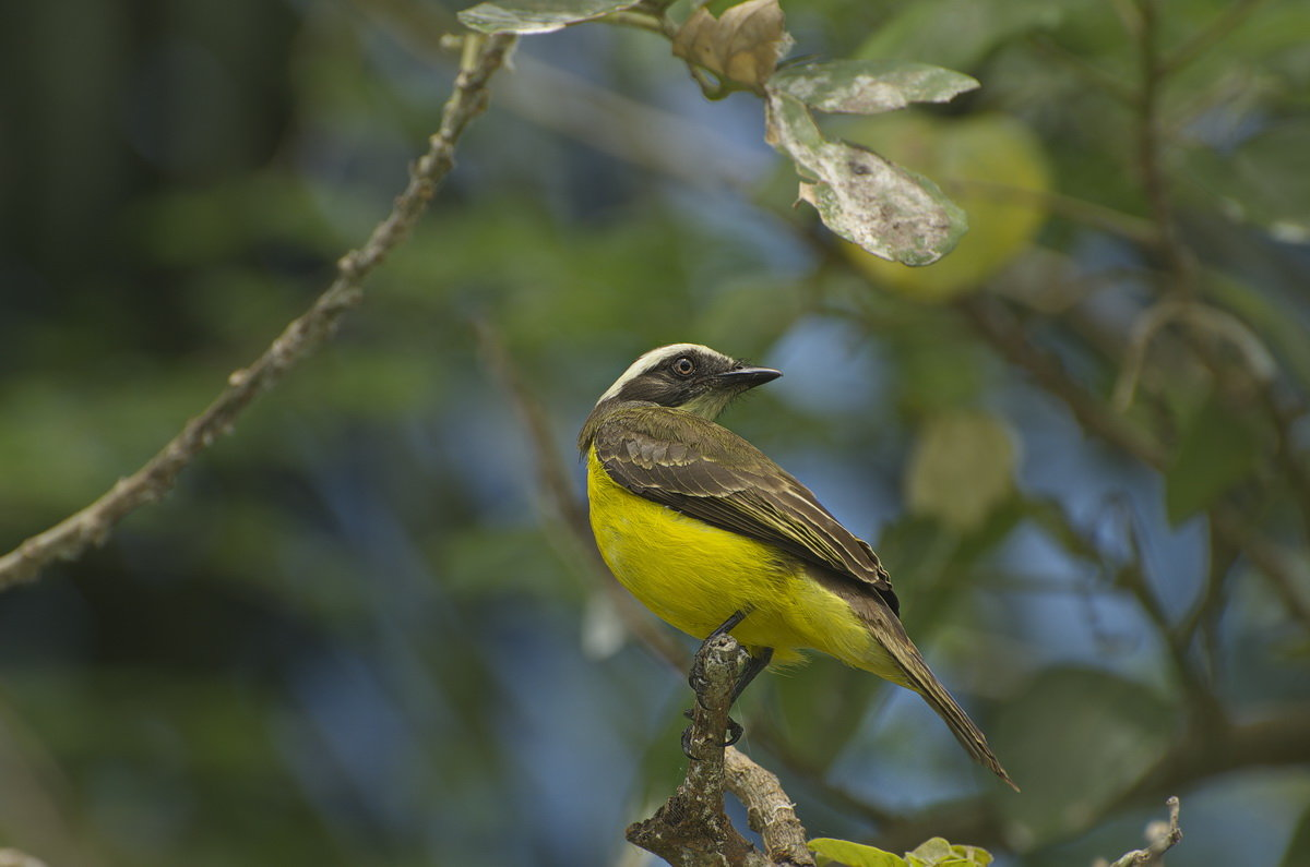 Птицы Перу - Svetlana Galvez