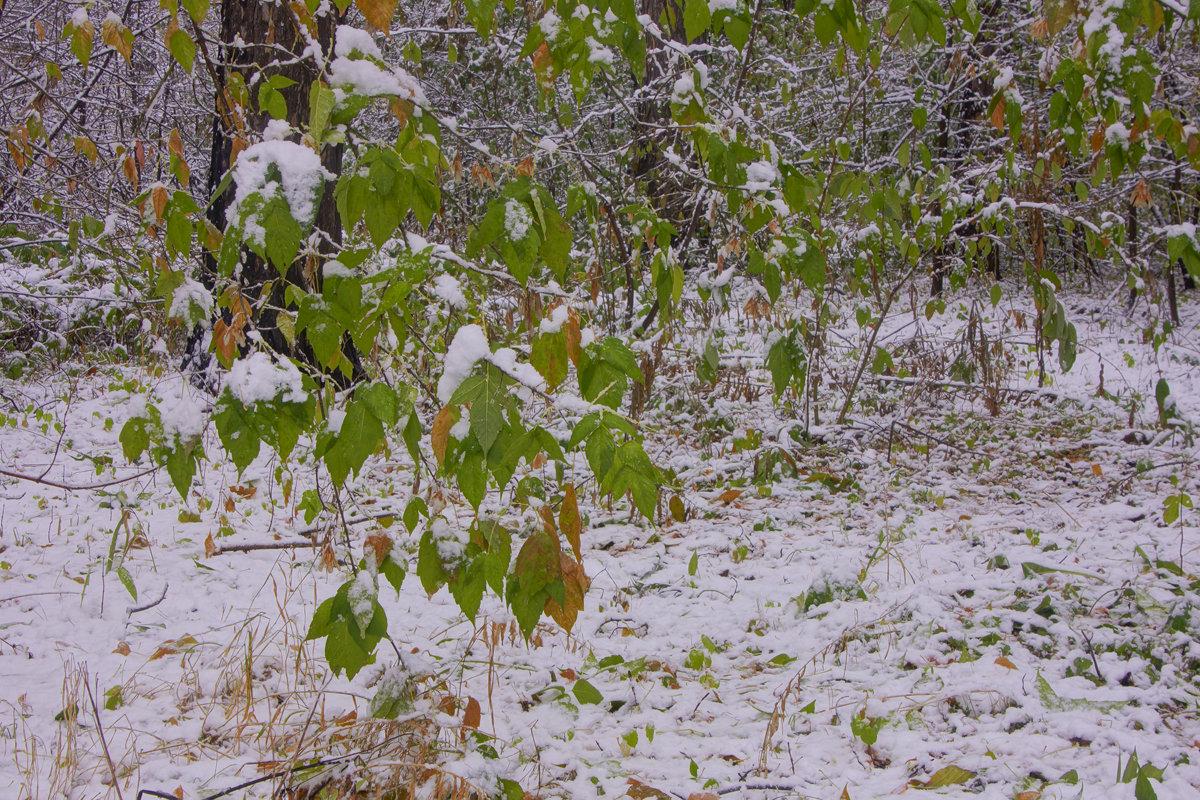 Первый снег---14 - Владимир Холодный