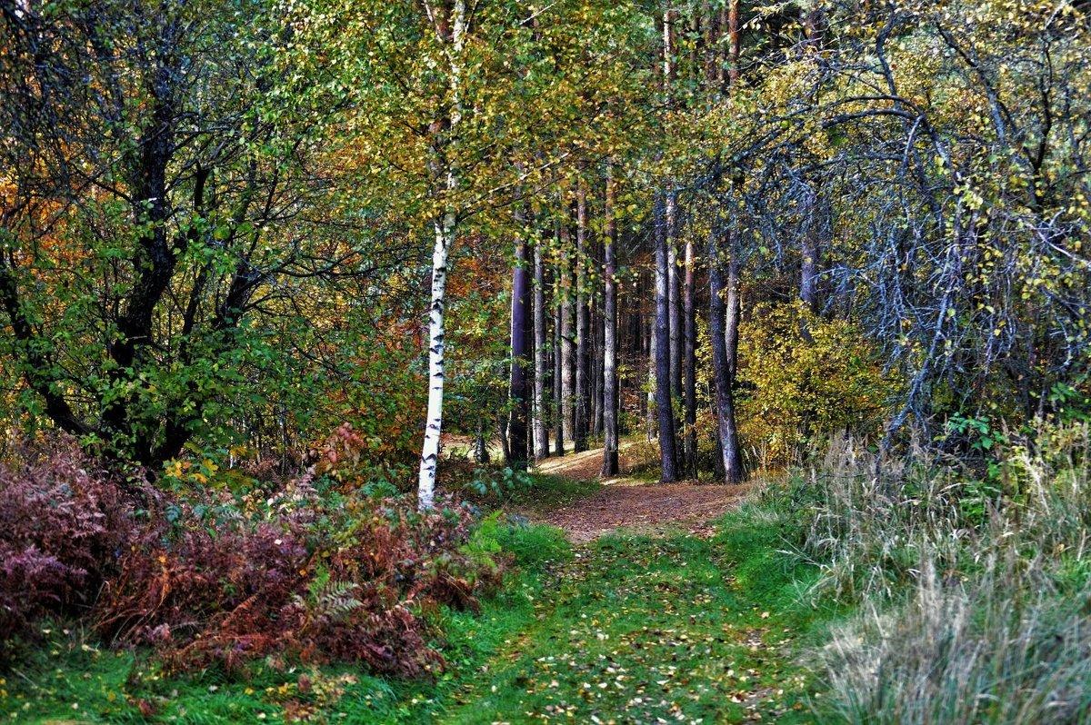 В лесу. - Новиков Игорь