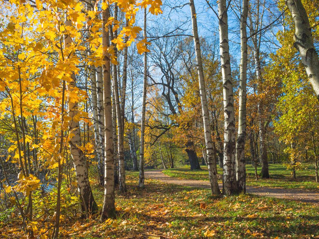 Золотая осень в парке 3 - Виталий