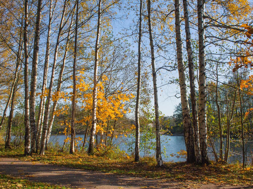 Золотая осень в парке - Виталий