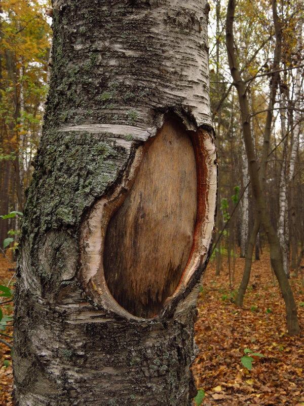 Окно в мир ботаники - Андрей Лукьянов