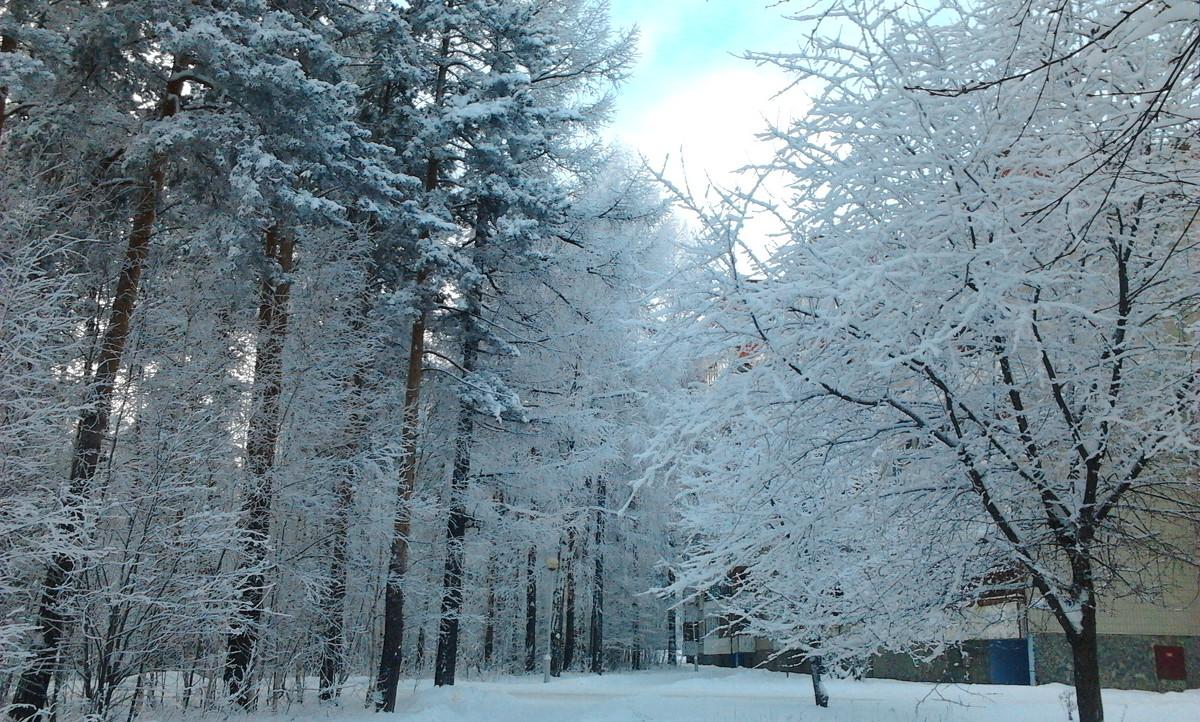 зима - дарья новоселова