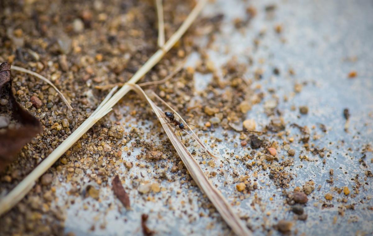 Одинокий муравей - Евгений Ковалев