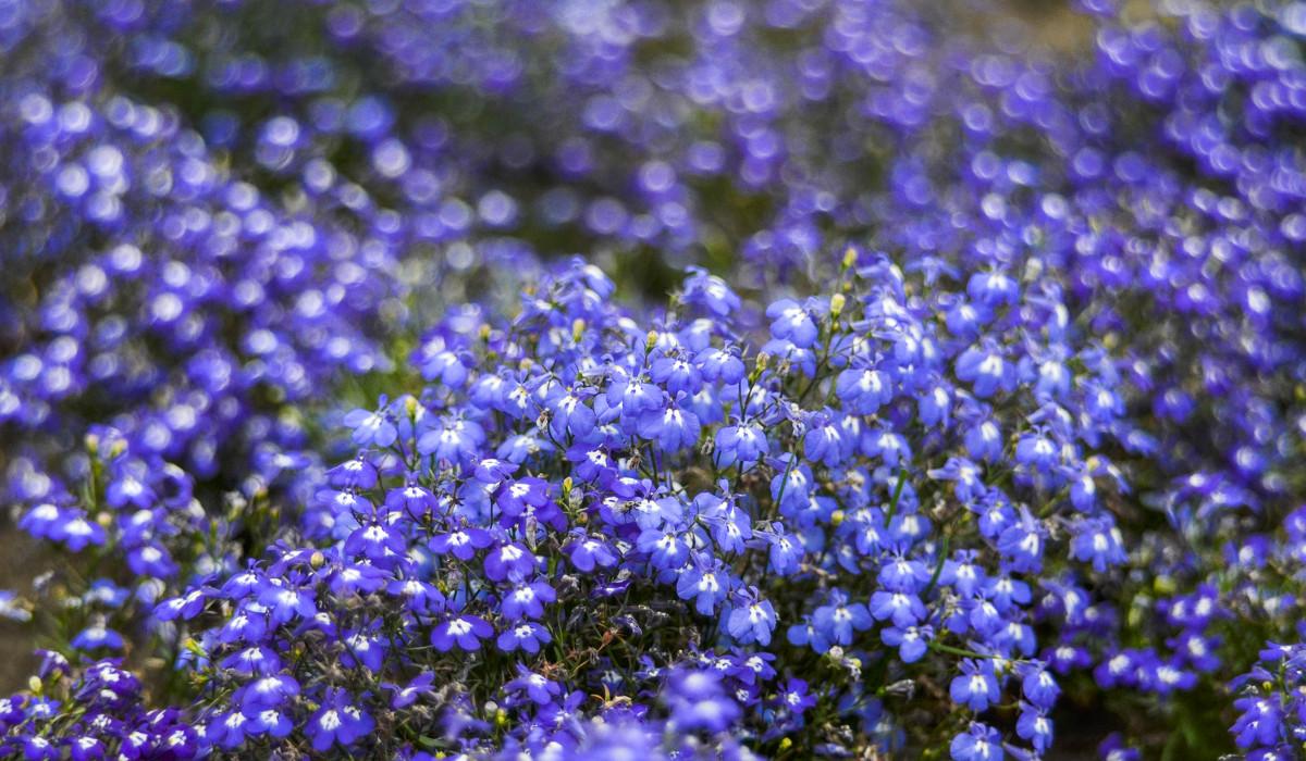 Фото синие цветы в инее 122