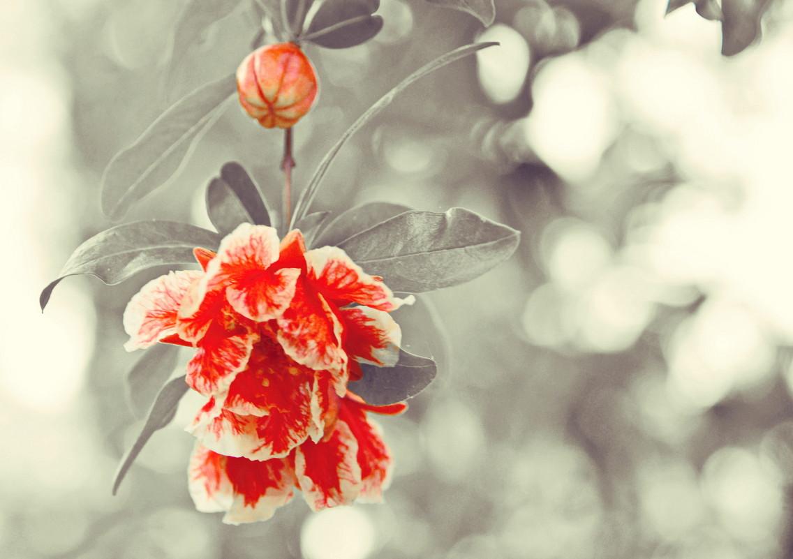 цветок - Nina Delgado