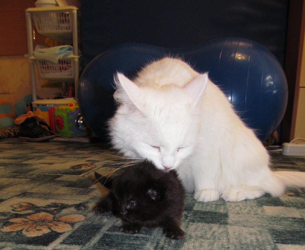 Кошка и котёнок - Сергей Ткаченко