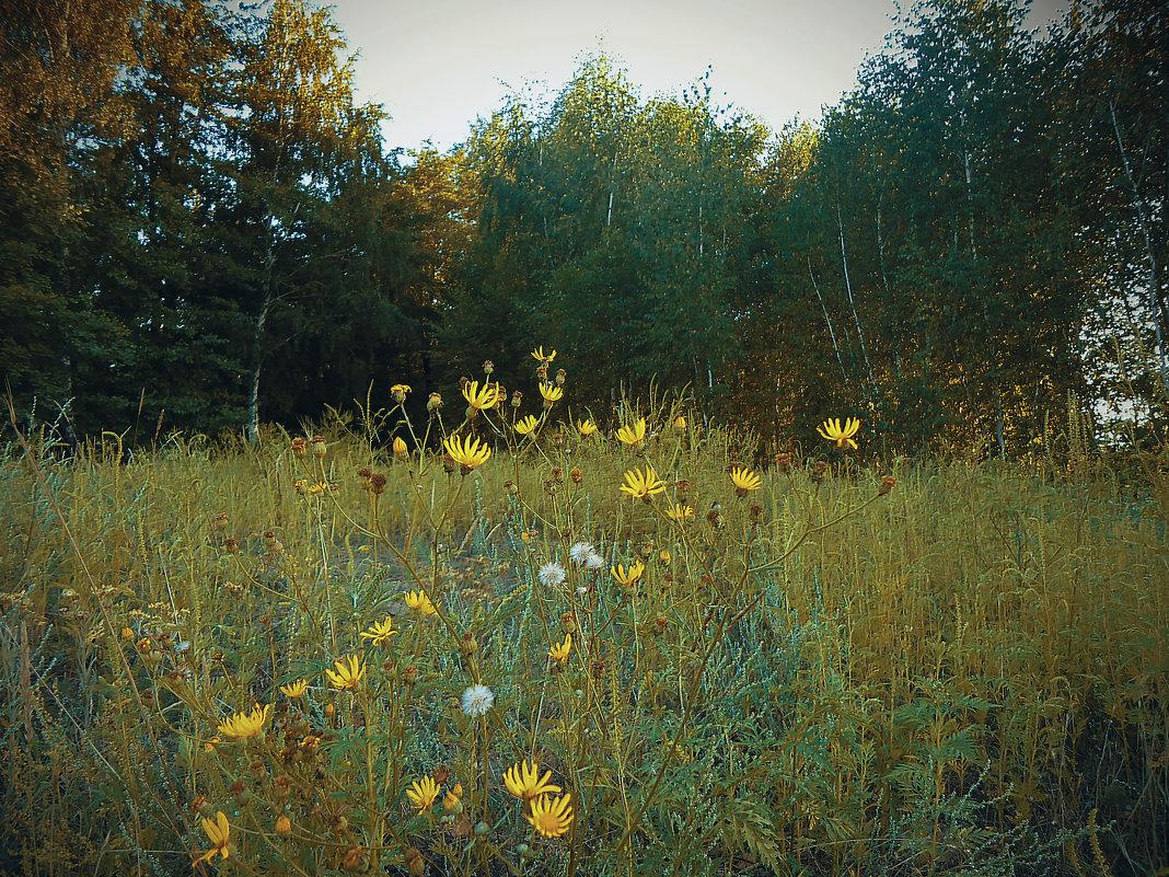 Лесные цветы - Виктория Власова
