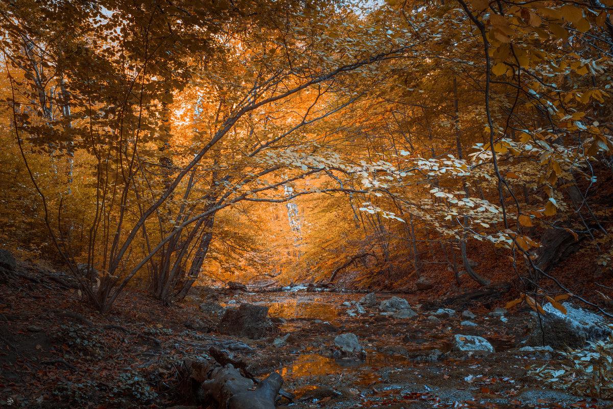 в глубине леса - Sergey Bagach