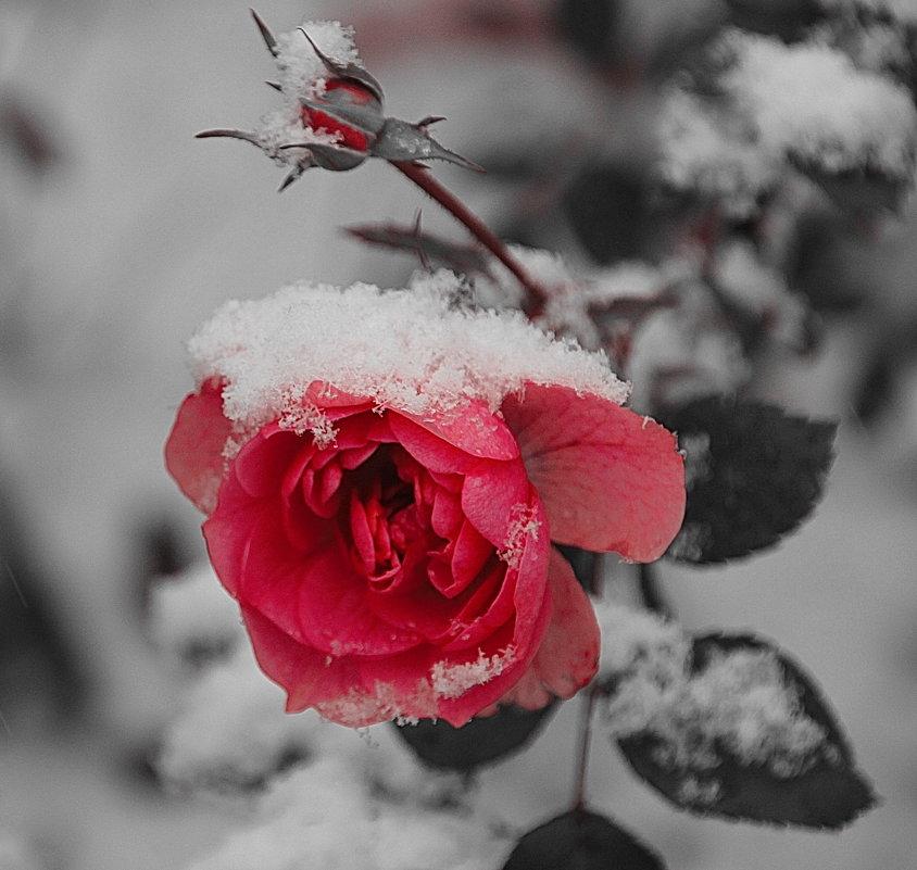 Прекрасна ты и в день ненастный..... - Tatiana Markova
