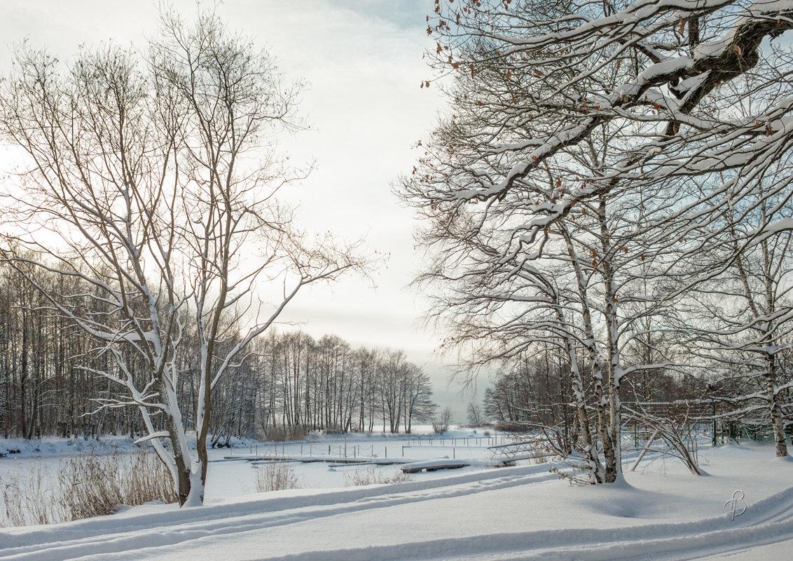 Снежный ноябрь 10 - Виталий