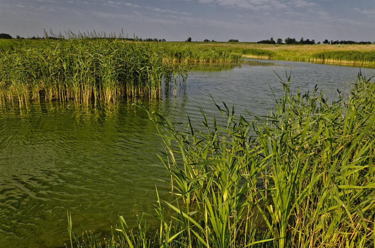 Озеро Юрово - Александр Березуцкий (nevant60)