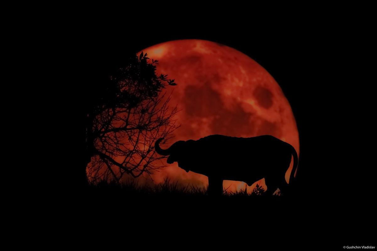 Африканская ночь - Vladislav Gushin