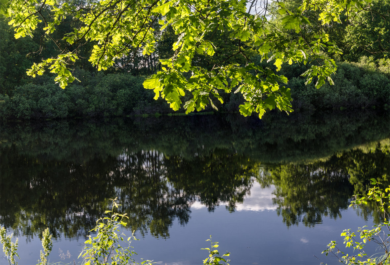 Озеро Усовье - Александр Березуцкий (nevant60)