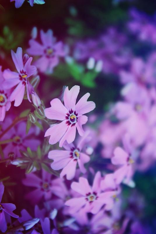 Дарья цветы