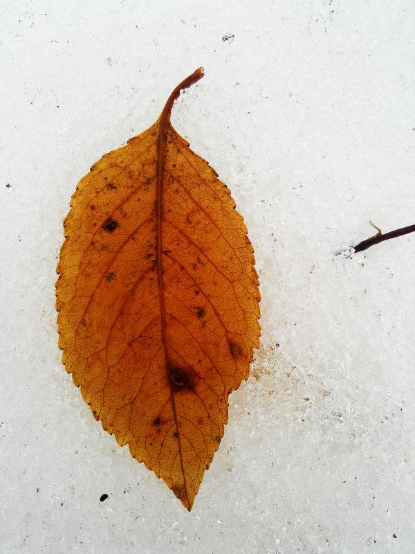 Осенний лист на снегу - Татьяна Королёва
