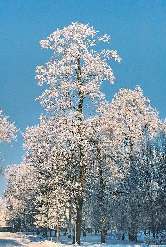 Уголок зимнего парка - Сергей Тарабара