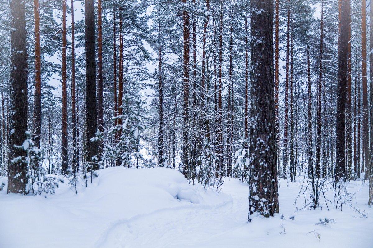в лесу - Людмила Сафина