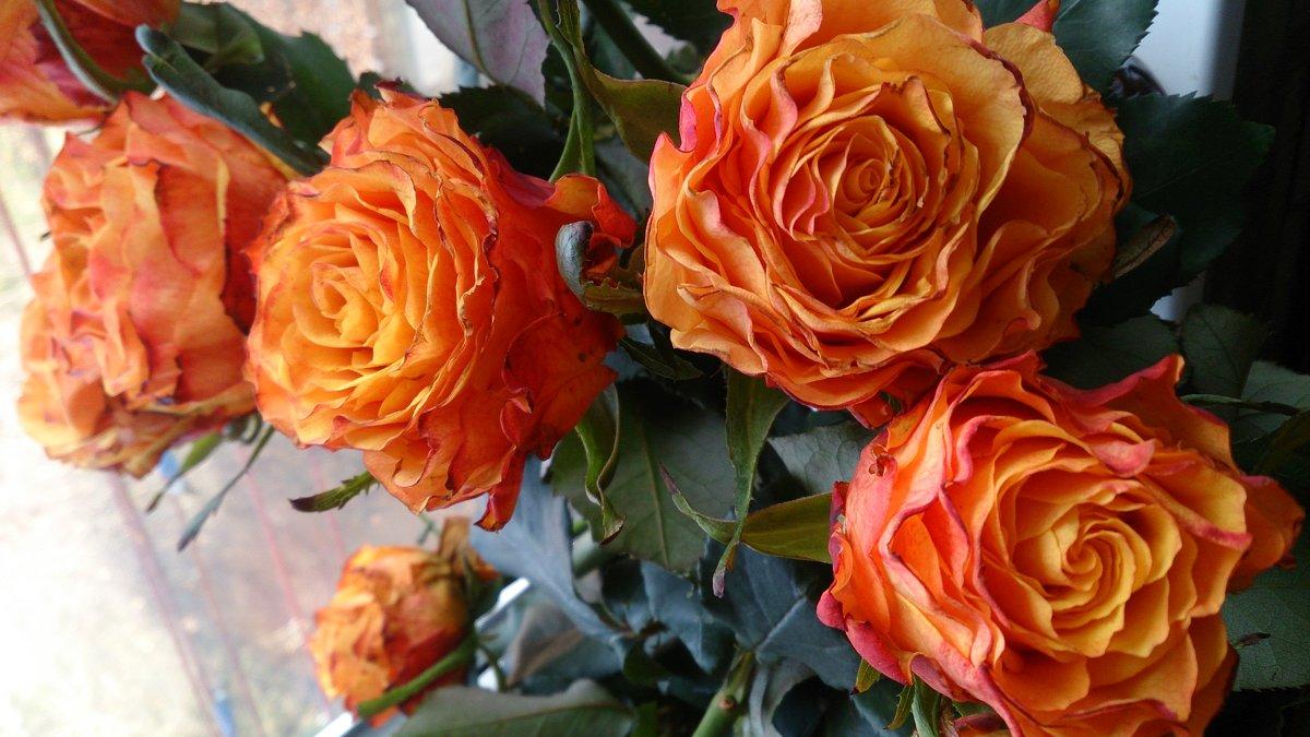 Оранжевые розы - Людмила Март