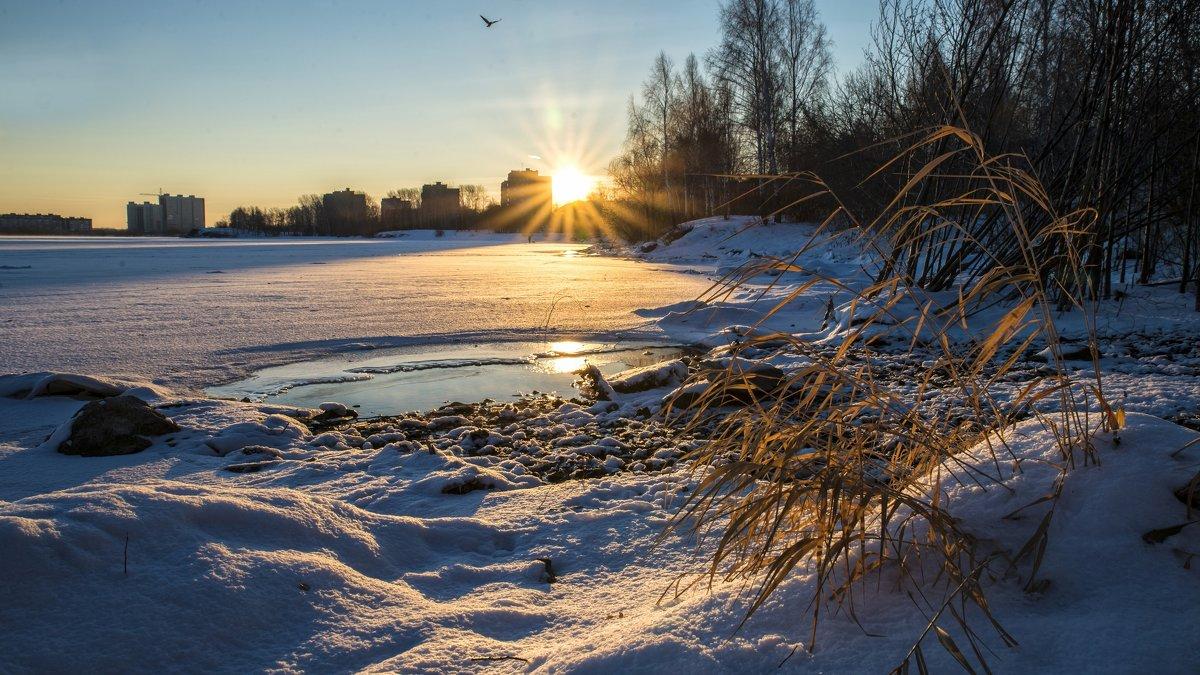 cold morning - Dmitry Ozersky