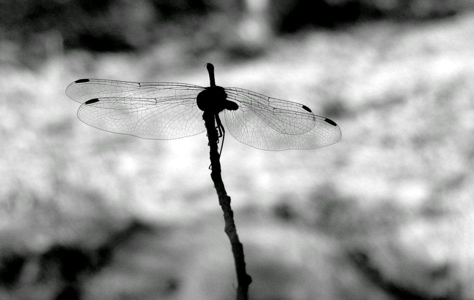 Крылья - GL