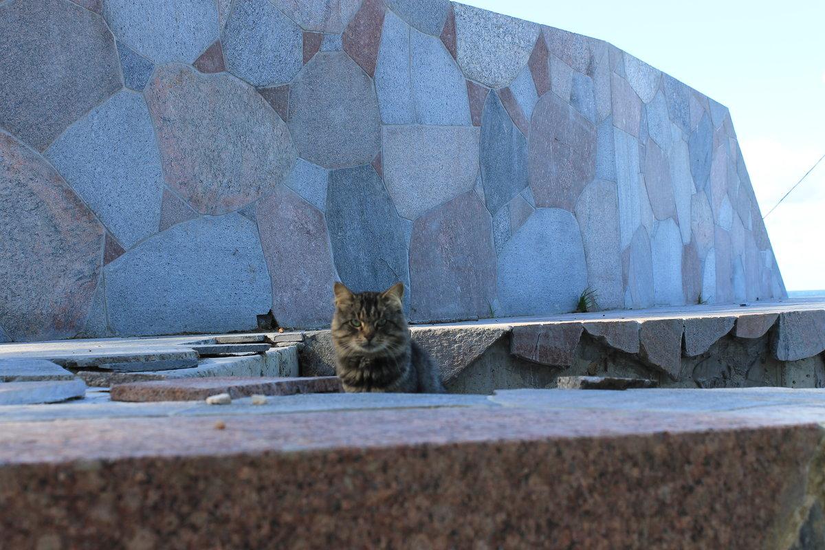 Кот на страже - Евгения Коркунова