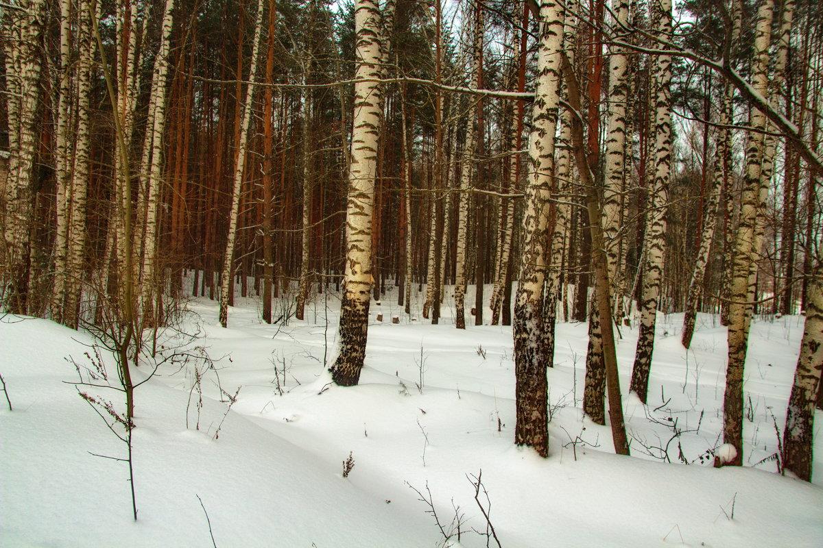 В декабрьском лесу. - Анатолий. Chesnavik.