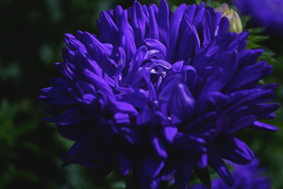 Цветок - Julia Volkova