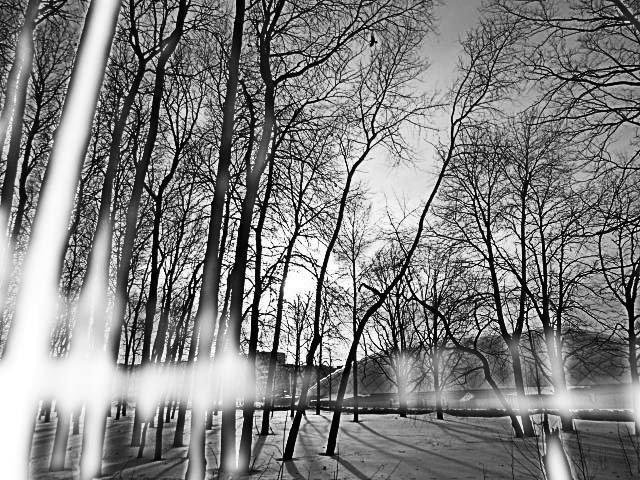 в лесу - Юлия Денискина