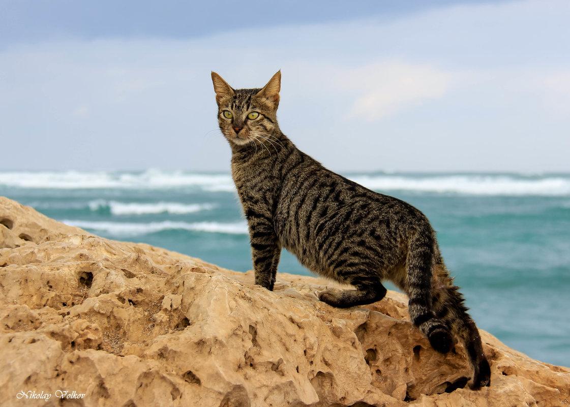 Кошки живущие у моря - Николай Волков
