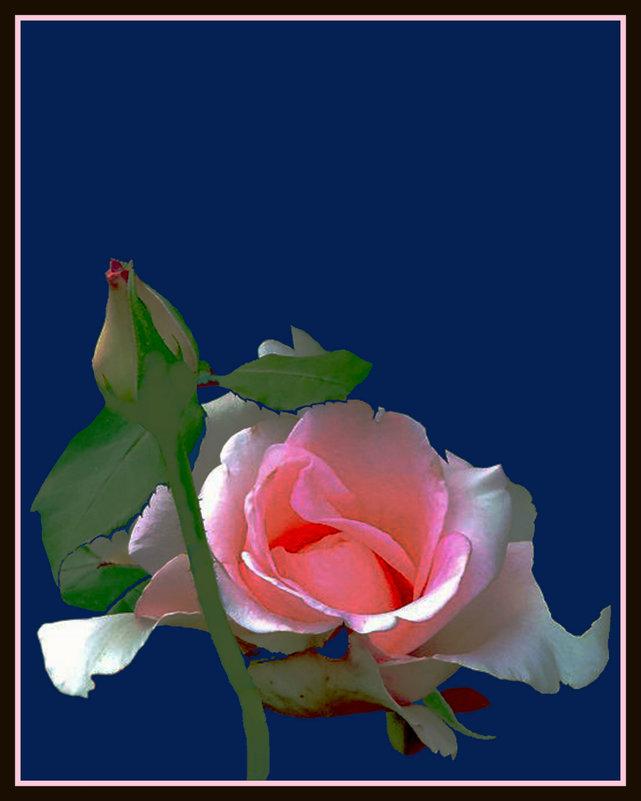 утренние розы 12 - Владимир Хатмулин