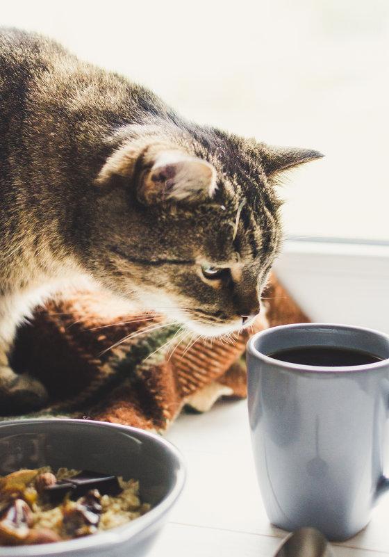 Завтрак на двоих - юлия соколова