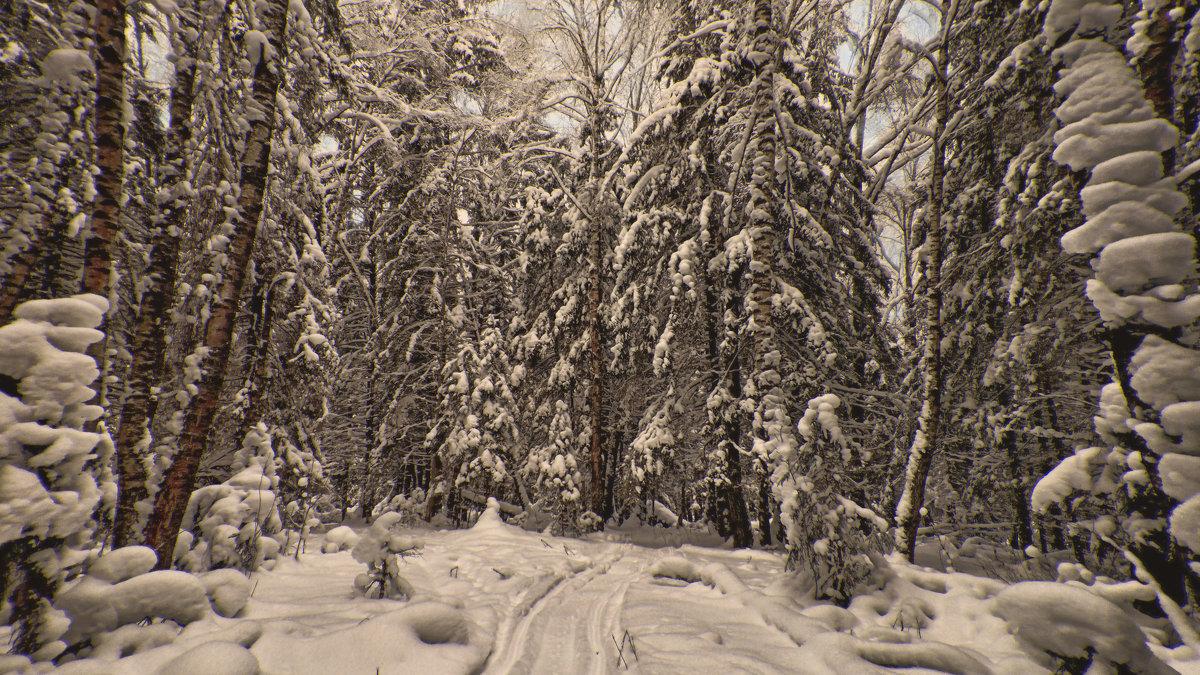 """В зимнем лесу."" - victor buzykin"