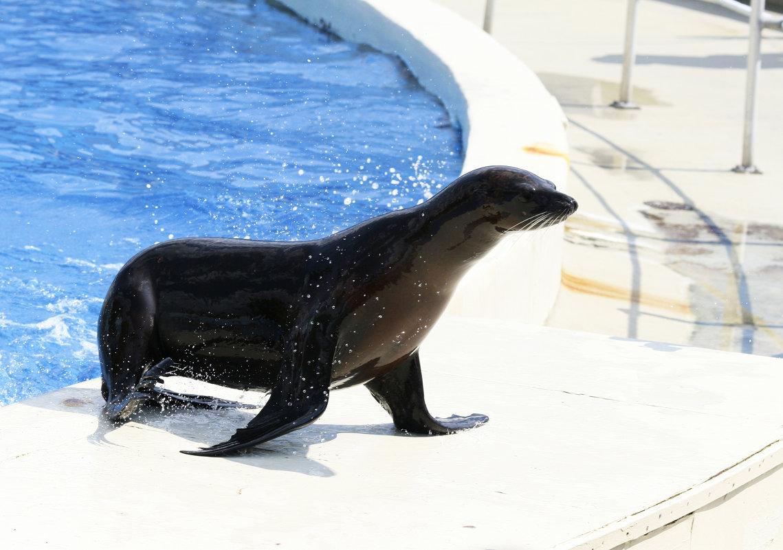 Морской котик - Мария Самохина