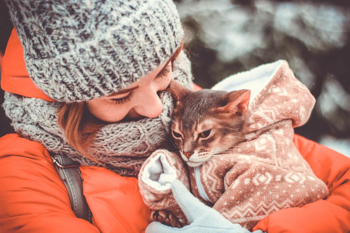 Абиссинская кошка - Людмила Ильина