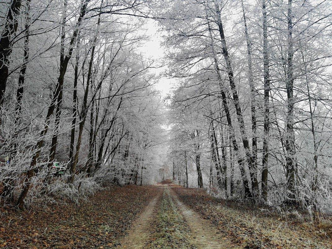 Лес... зима.. тропа.. - Эдвард Фогель