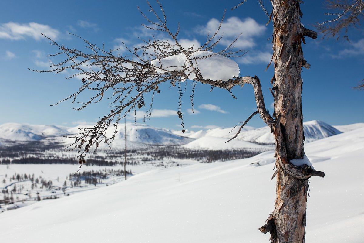 Облако на ветке - Сергей Прилуцкий