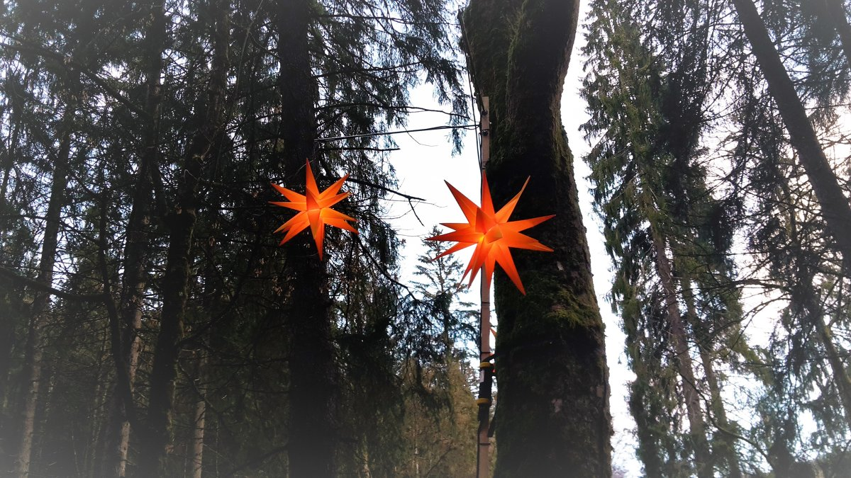 волшебный лес - kuta75 оля оля