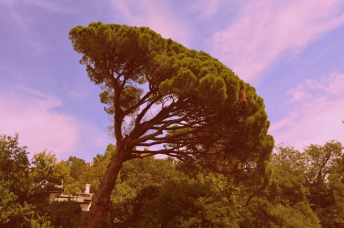 падующее дерево - руслан морквин