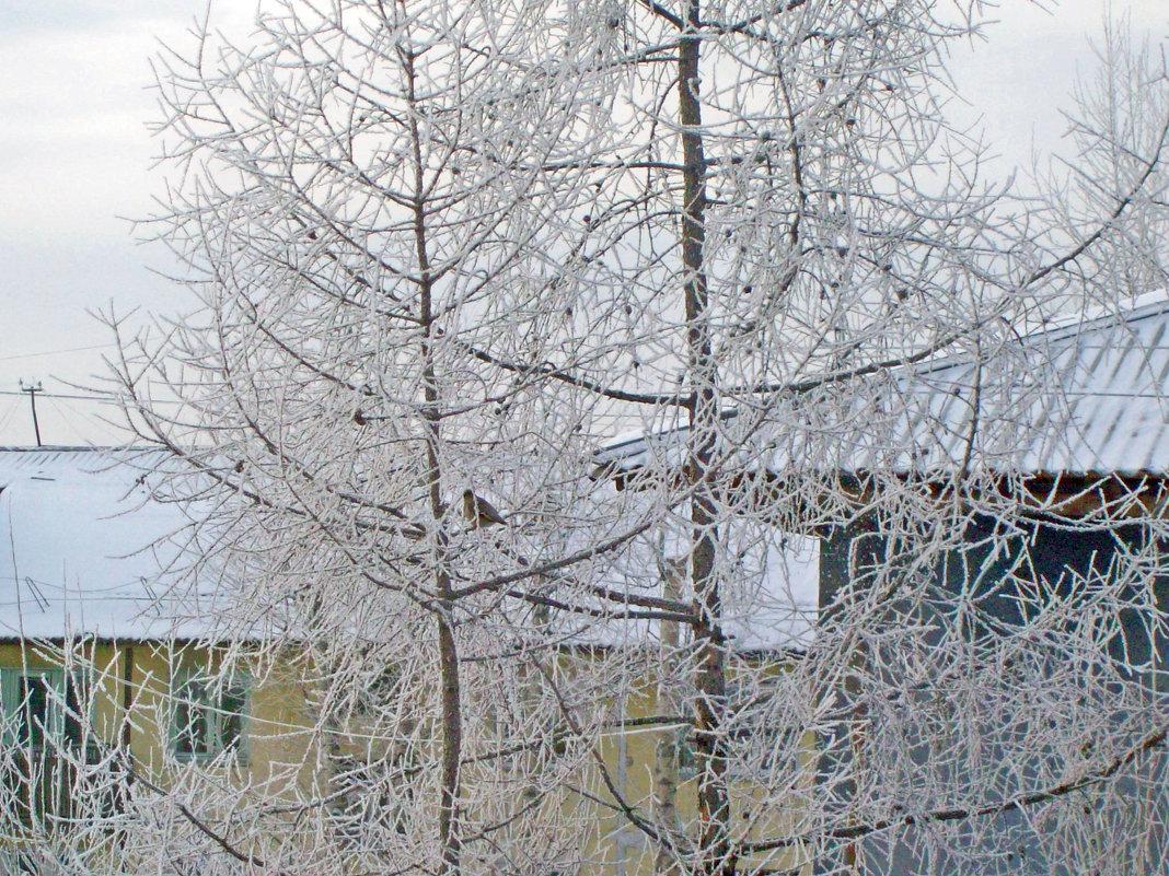 Птицы зимой - alemigun