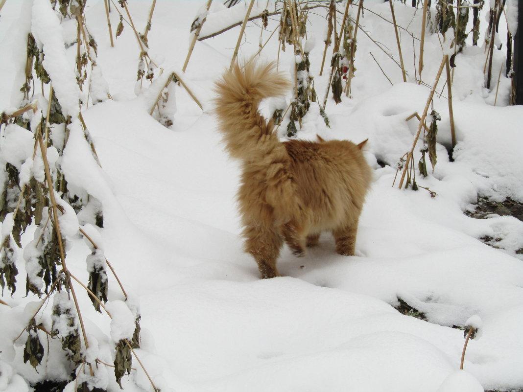 Кот на прогулке - наталия